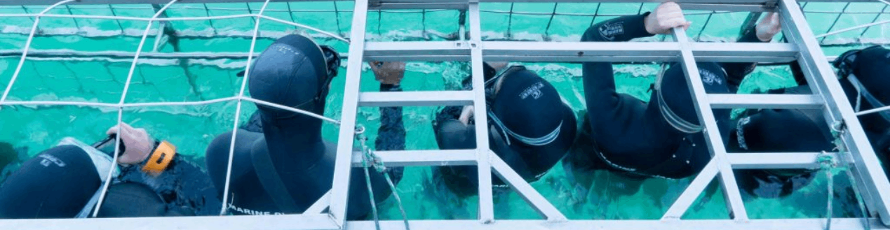 Use Bus Hire Services to Shark Cage Diving in Gansbaai